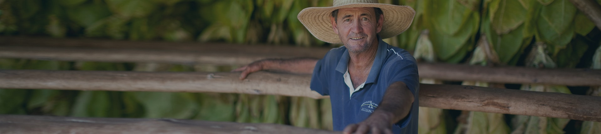Discover how PMI manages its tobacco crop