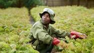 img_pmi_sustainable_development_goals_thumb