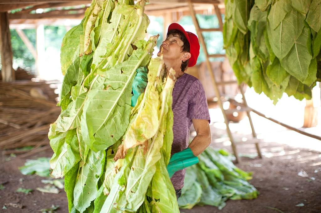 img_pmi_World_Day_Against_Child_Labor_hero