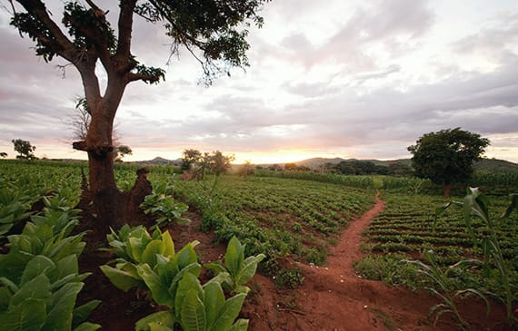 Philip Morris International marks progress in addressing labor issues in tobacco-growing.