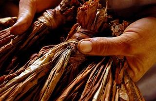pmi_wbcsd_biomass_cases_study