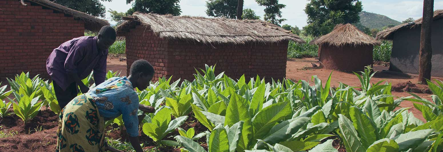 Sustainability-Commited-to-good-agricultural-practices