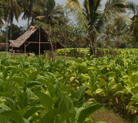 sustainability_good_agricultural_practices_1920x429