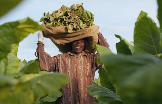 Thumb_Sustainability-Upholding-labor-rights-on-farms