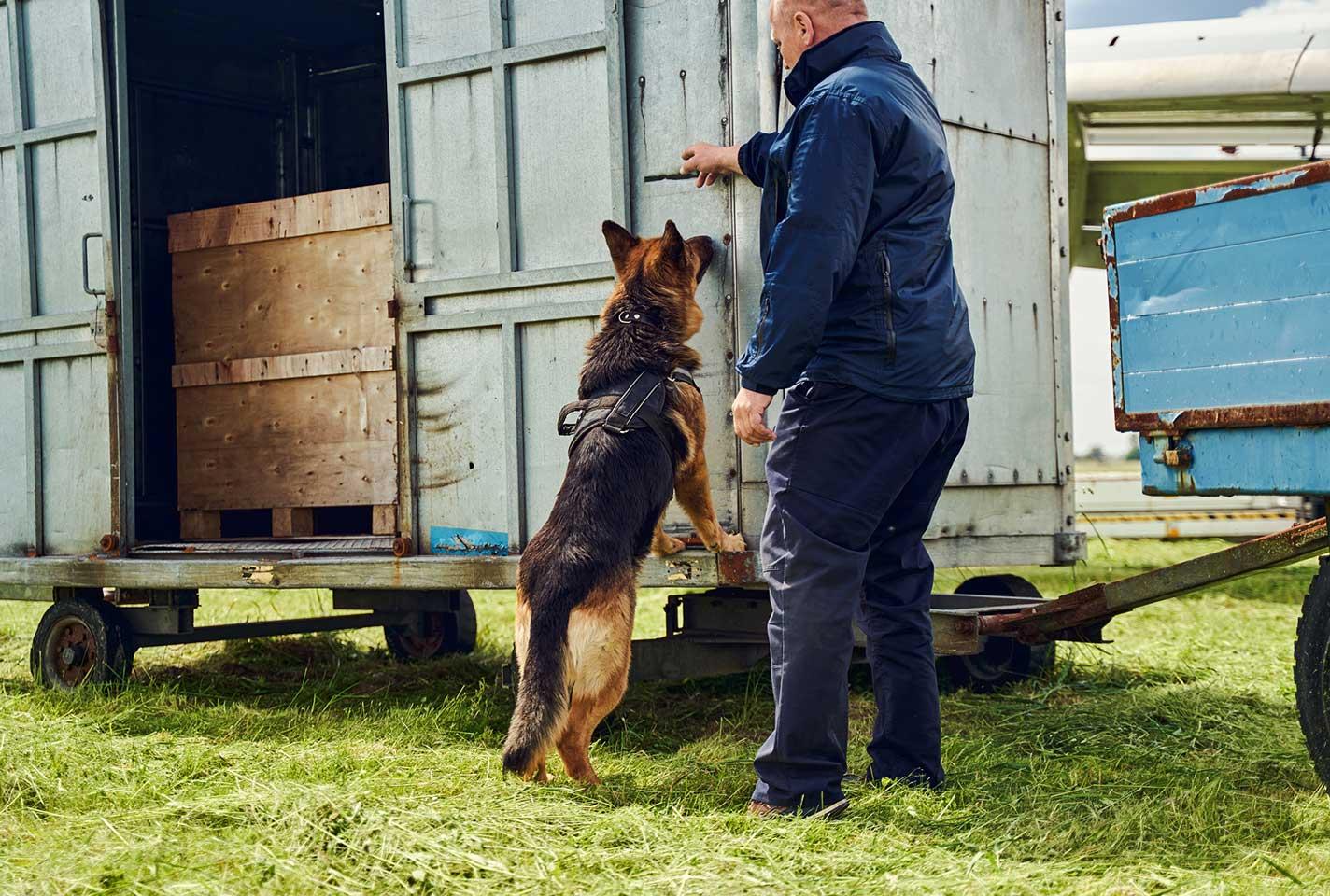 dog-searching-cargo-illicit-trade-web