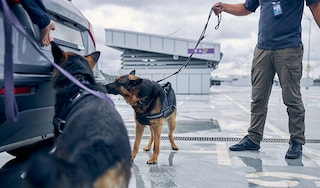 Security dogs illict trade OG thumbnail