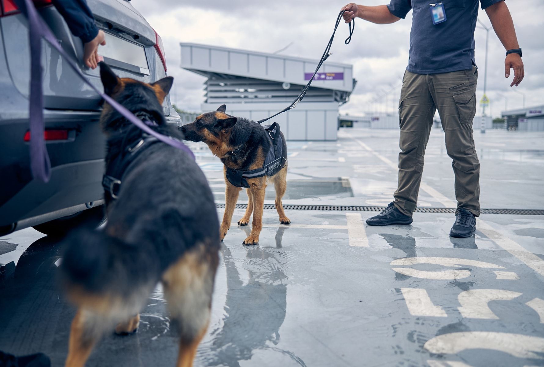 Security dogs illict trade