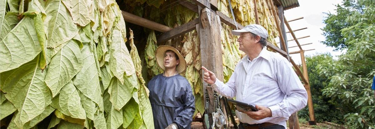tobacco curing barn