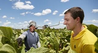 Tobacco farm worker and field technician in Brazil