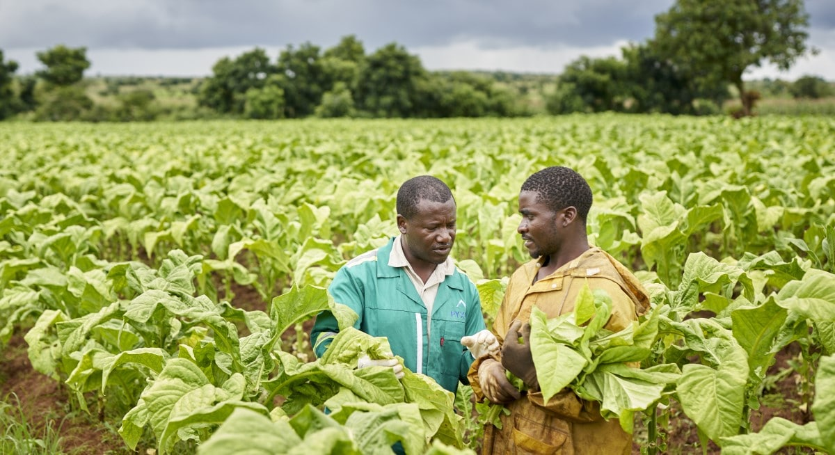 tobacco farmer and field technician Malawi