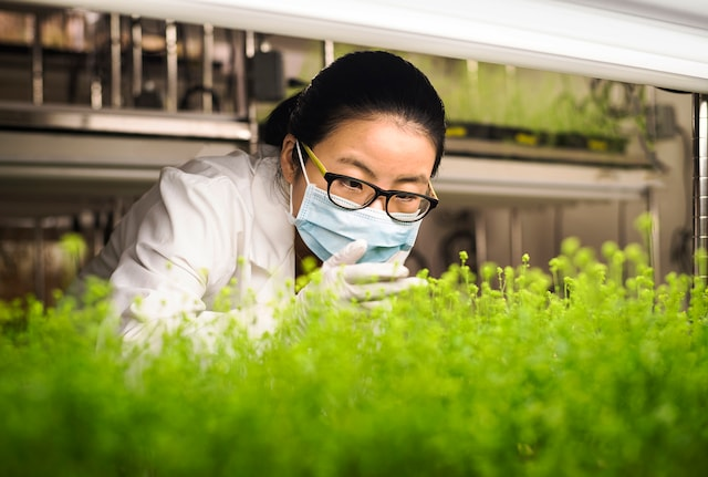 Scientist working with plants