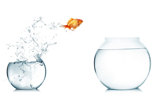 Jumping goldfish Getty 1780x1200