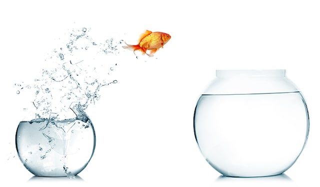 Jumping goldfish Getty thumbnail