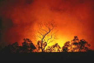 Australia bushfires highlight article crop