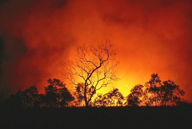 Australia bushfires highlight article crop