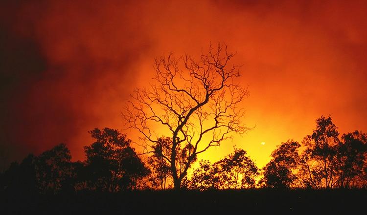 Australia bushfires OG thumbnail