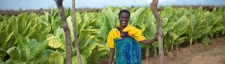 Tobacco farm Malawi female banner