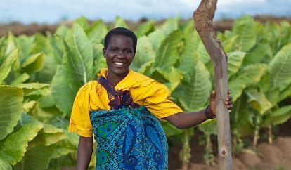 Tobacco farm Malawi OG thumbnail