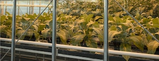 banner sustainability option 2