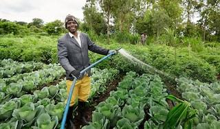 crop diversification case study thumbnail