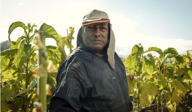 Argentina tobacco farmer thumbnail