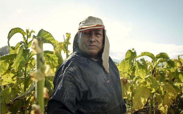 Argentina tobacco farmer