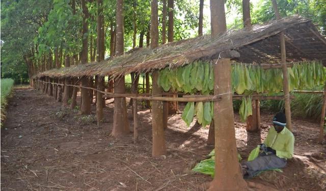 Malawi case study thumbnail