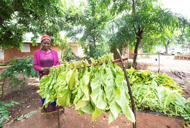 socio-economic-progress-malawi-hero