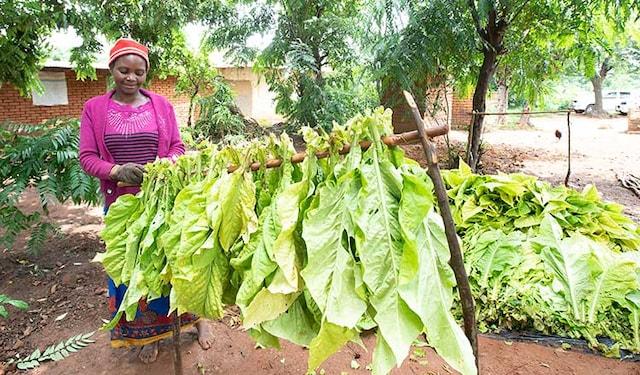 socio-economic-progress-malawi-thumb