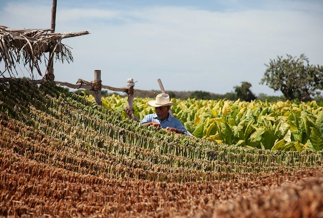 socioeconomic-nayarit-farmer-B