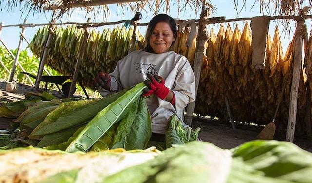 socioeconomic-nayarit-farmer-thumb