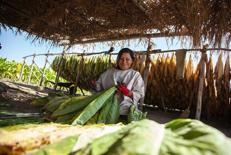 socioeconomic-nayarit-farmer
