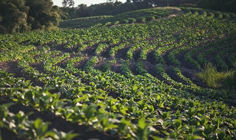 L3_VISUAL-TAB_01-crop-protection