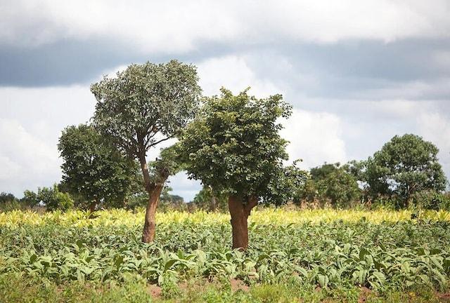 Malawi forest 1780x1200