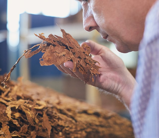 processing-tobacco
